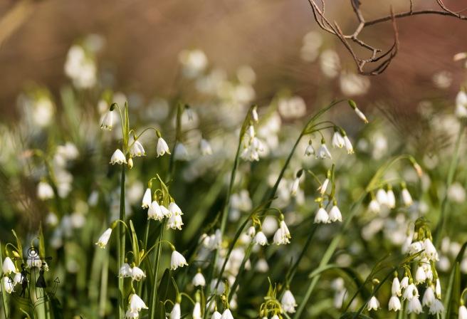 Kew Gardens Mar 2016_IMG_7547.jpg