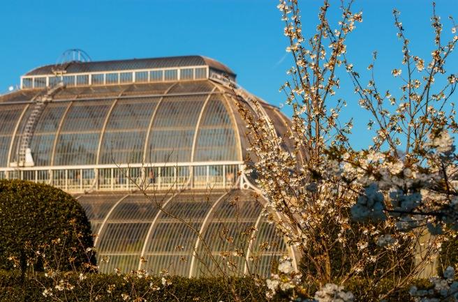 Kew Gardens Mar 2016_IMG_7595.jpg