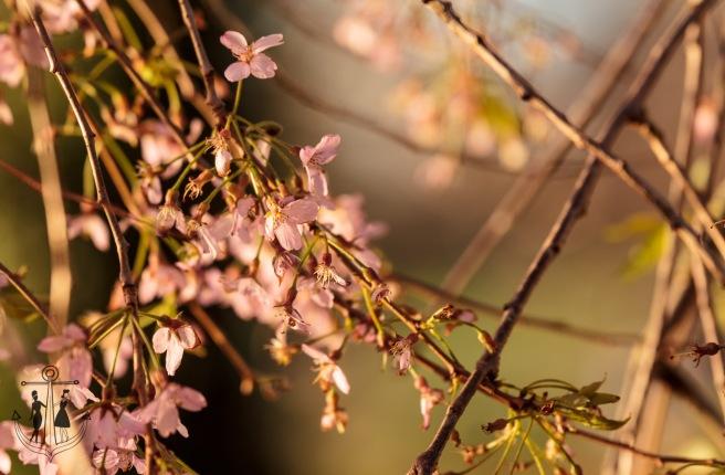 Kew Gardens Mar 2016_IMG_7625.jpg