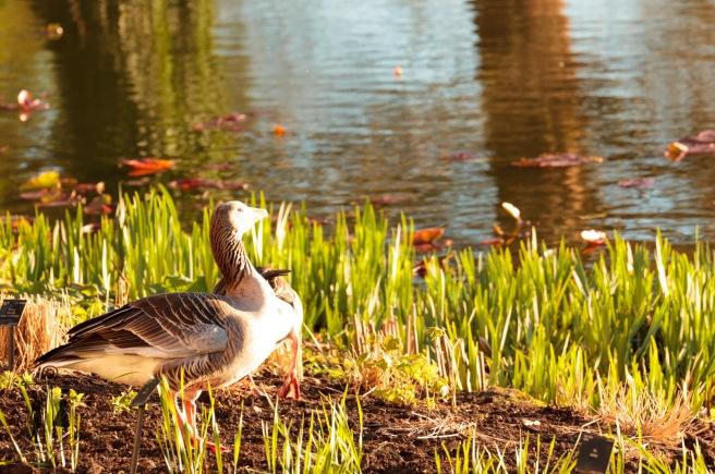 Kew Gardens Mar 2016_IMG_7640.jpg