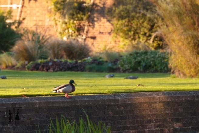 Kew Gardens Mar 2016_IMG_7651.jpg