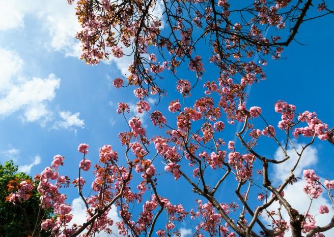 Kew Gardens Apr 2017_IMG_1552.jpg