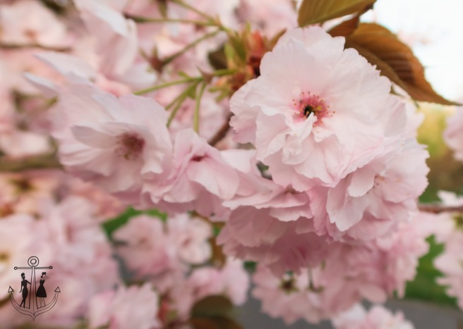 Kew Gardens Apr 2017_IMG_1628.jpg